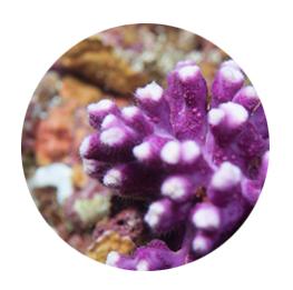 index-objetos-Coral
