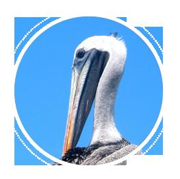 index-objetos-aves