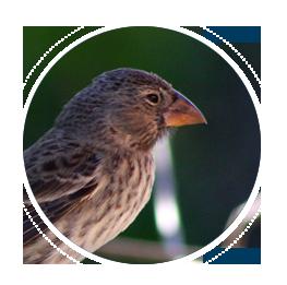index-objetos-aves-migratorias