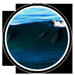 index-objetos-cetaceos