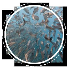 index-objetos-peces-pelalgicos