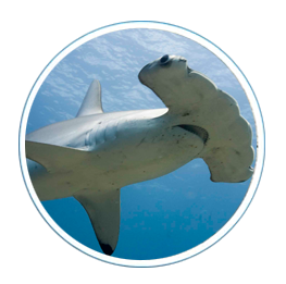 index-objetos-tiburones