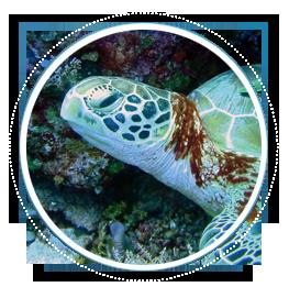 index-objetos-tortugas